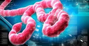 Wroclaw Doctors Calm About Ebola Threat